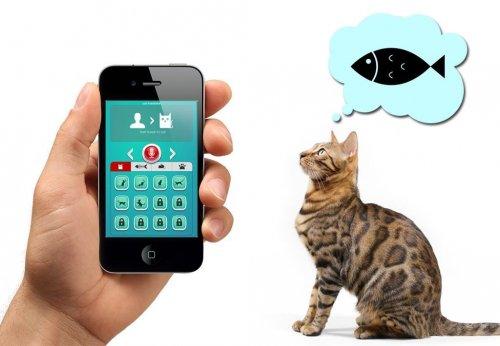 Переводчик на кошачий язык